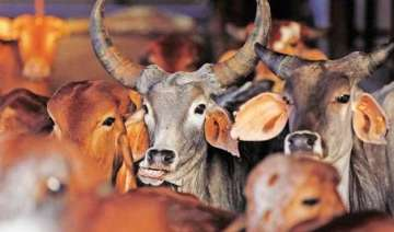 beef row vhp dares the dissenting awardees to eat...