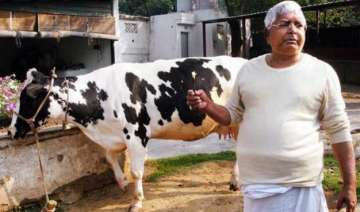 lalu s beef remark may prove costly for the grand...