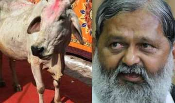 should cow replace tiger as national animal...
