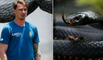 dale steyn s close call with deadly black mamba -...