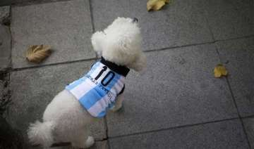 fifa world cup in argentina even dogs get snazzy...