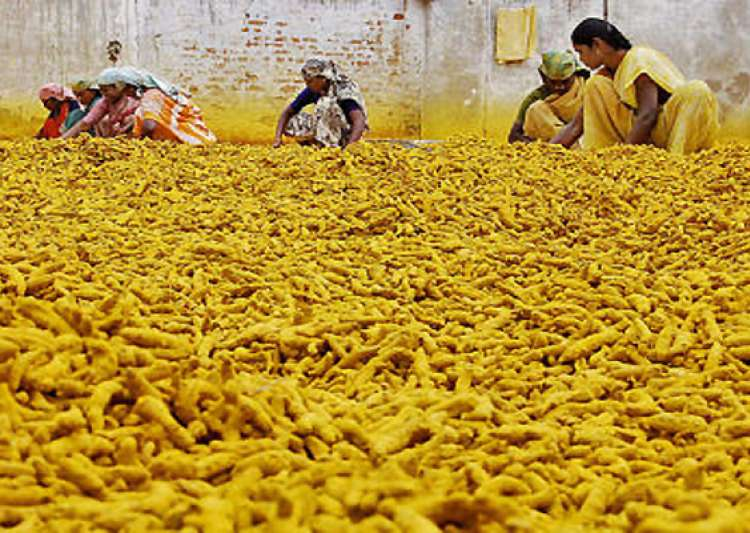 turmeric price shoots up by rs 2500 a quintal in a month- India Tv