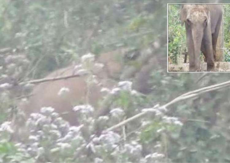 madly in love male wild tusker breaks into odisha zoo to mate with female elephant- India Tv