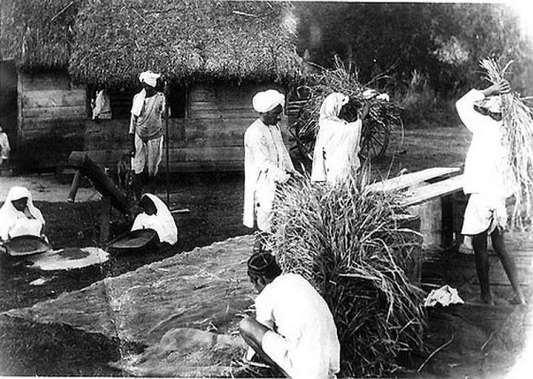 unearthing history indian workers killed 110 years ago in suriname- India Tv