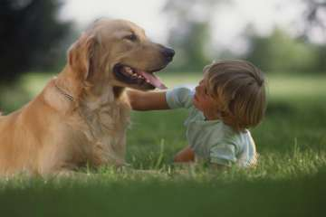 Dogs possess social skills similar to toddlers