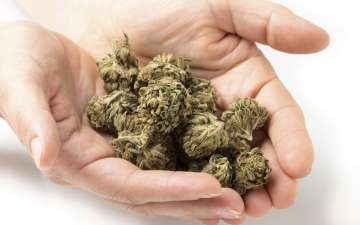 This country has approved the medicinal use of...