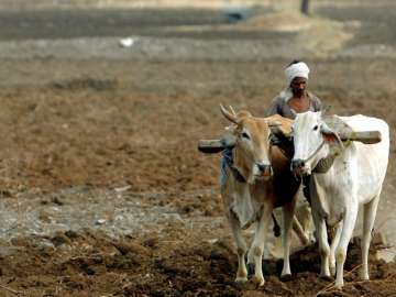 389 farmers committed suicide in Maharashtra this...