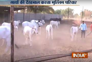A Muslim family in Pune has been running a cow...