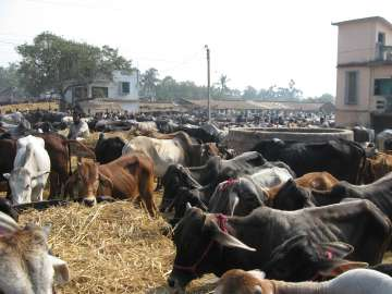 Centre bans sale, purchase of cattle from animal...