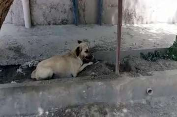 Dog sentenced to death in Pakistan for biting...