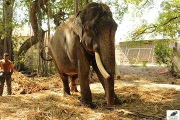 gajraj elephant wildlife sos rescue