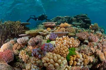 The Great Barrier Reef, coral reef, lifestyle