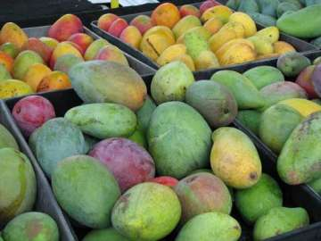 Mangoes of India - India TV