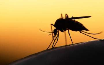 zika affected by dengue
