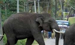 Elderly man trampled to death by elephant