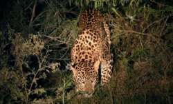 Man injured in leopard attack in Assam