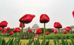 Mughal Gardens to shut for public on day 2 of Trump's visit