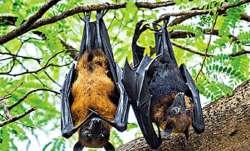 UP village bats found dead