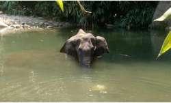 elephant in kerala,kerala elephant died,elephant died,elephant died in kerala,elephant died in keral
