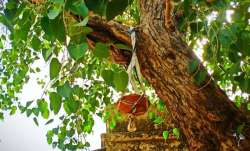 Vastu Shastra: Never plant Peepal tree at home. Here's why