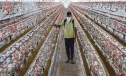 Punjab reports first bird flu case as samples taken from