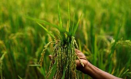 The massive hike in MSP of paddy and other kharif crops
